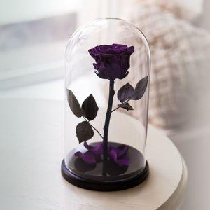 Роза под куполом – лучший подарок для любимой